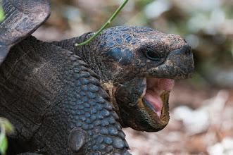 Photo: Tortoise face shot