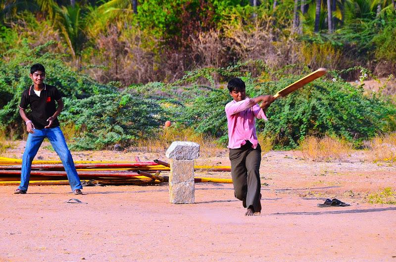 Cricket. di matteo_maurizio_mauro