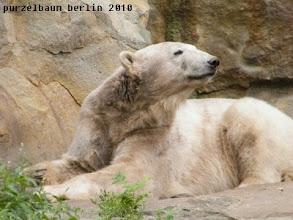 Photo: Knut wirft einen Blick in die Runde ;-)