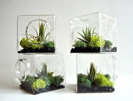 Mini Terrarium Ideas 1.0 screenshots 2