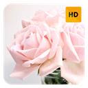Roses Wallpaper HD New Tab Theme Icon