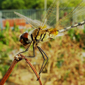 Angry Dragon by Chhaditya Parikh - Animals Insects & Spiders