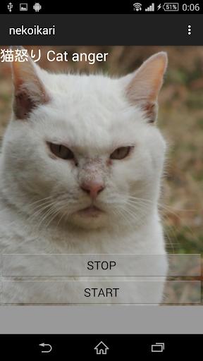 猫鳴き声怒り