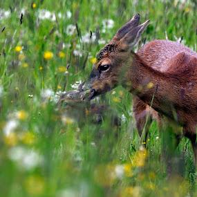 Big and small by Zeljko Padavic - Animals Other Mammals (  )