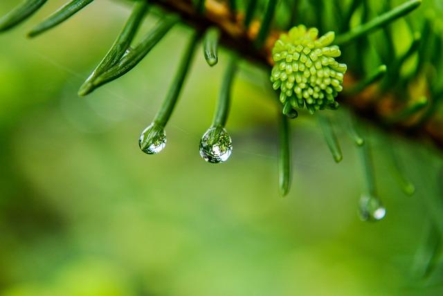 A Drop Of, Rain, Drop Of Rain,
