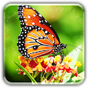 Butterfly wallpapers LWP icon