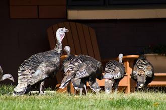 Photo: The turkeys