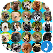Appp.io - Dog Barking Sounds
