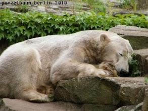 Photo: Knut laesst sich nicht stoeren ;-)