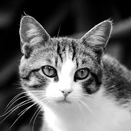 by Lorraine Bettex - Black & White Animals (  )