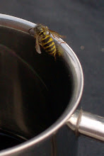 Photo: Beispiel der Wespenplage.