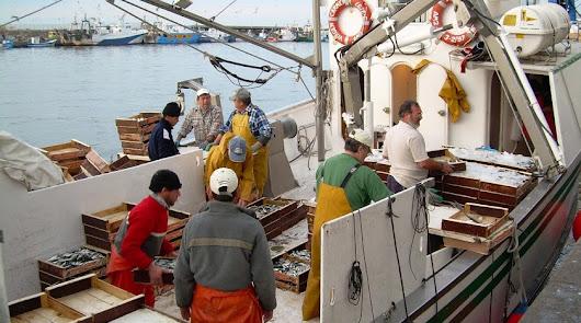 """La pesca de arrastre """"limpia el fondo marino de basura y plásticos"""""""