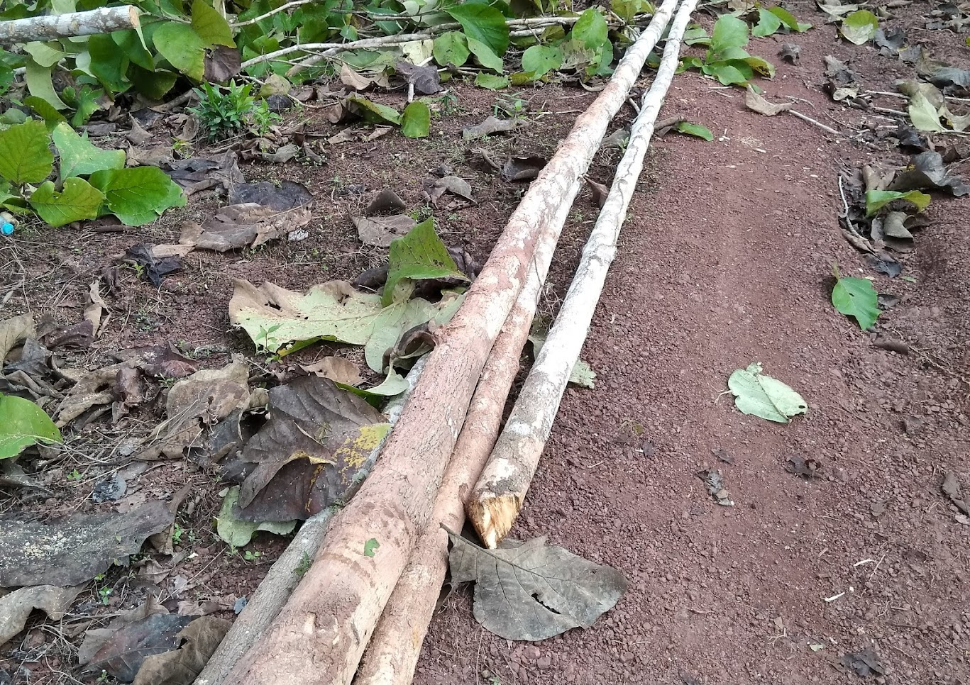 木の切り出し