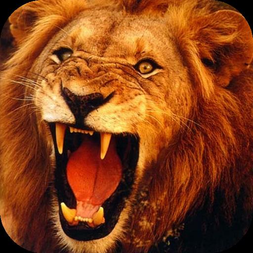 Lion 3d Live Wallpaper Apps On Google Play