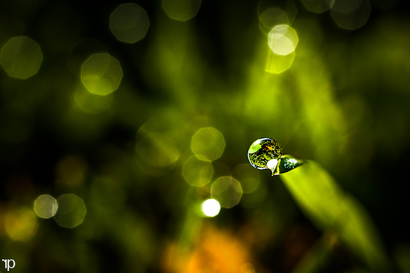 Photo: dance of bokeh  #project365 +G+ 365 Project Day186/366