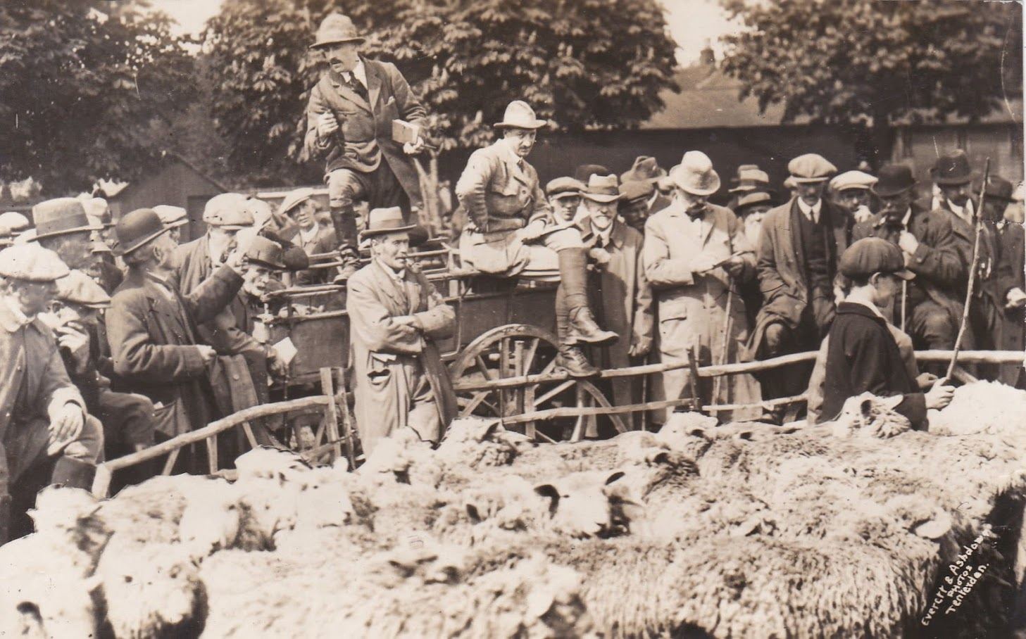 Tenterden Archive photos - Tenterden Market - Cattle and Sheep