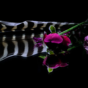 Reflecting the beauty... by Prasant Kumar - Nature Up Close Flowers - 2011-2013