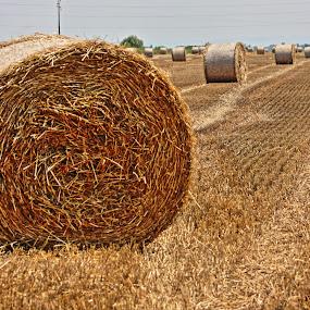 Straw rolls in wheat field by Зоран Милојковић - Landscapes Prairies, Meadows & Fields ( field, wheat, roll, straw, harvest )