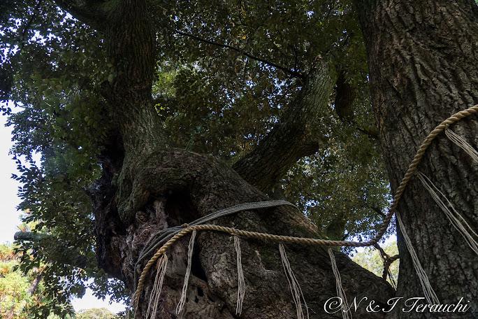 「睦の木」(むつみのき)