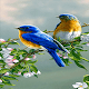 Love Birds Live Wallpaper for PC-Windows 7,8,10 and Mac