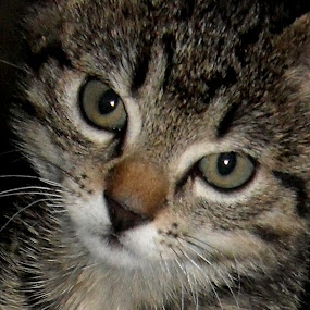 Cat by Gordana Djokic - Animals - Cats Portraits ( kitten, animals, cat, cute, small )