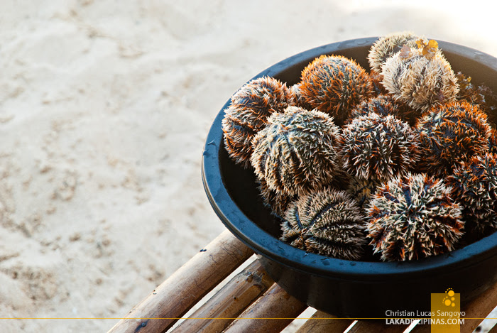 Patar White Beach Bolinao Maratangtang Sea Urchins