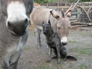 Photo: Hektor bij de ezels