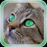 Cat Live Wallpaper v1.1