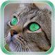 Cat Live Wallpaper v1.1