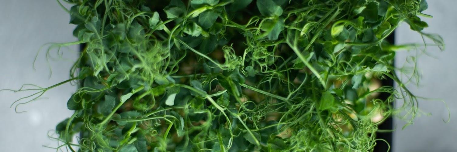 Indoor Acres Fall Vegan Pop Up Market Pre-Order