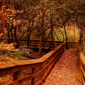 Alabama Forests by Angelika Sauer - Landscapes Forests ( forests, leafs, fall, alabama landscapes, photographer, trees, moundsville, angelika sauer, pathways, landscapes, romance, usa )