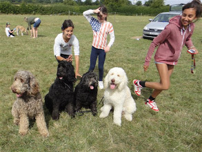 Photo: Tamsin, Lily and Natasha setting up the Labradoodle group!