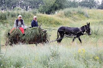 Photo: Day 88 - Donkey & Cart