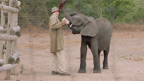 Elephant Rescue thumbnail