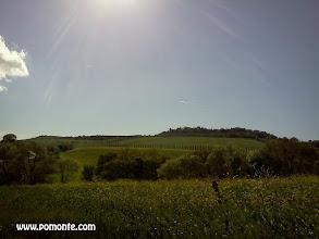 Photo: agriturismo vicino terme saturnia b&b girasole terzuolo www.pomonte.com