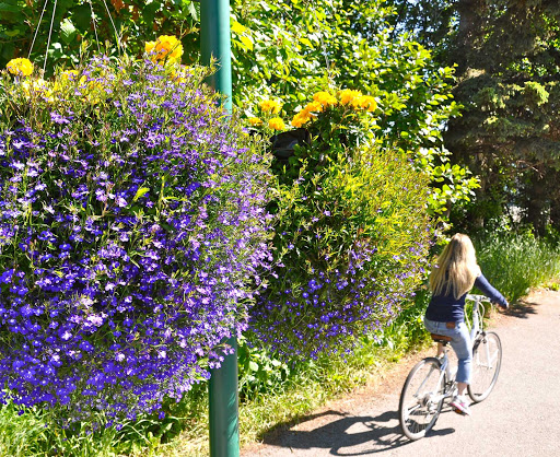 Biking Anchorage Trails - Roy Neese.Visit Anchorage.jpg - Biking during summer along one of Anchorage's numerous bike trails.