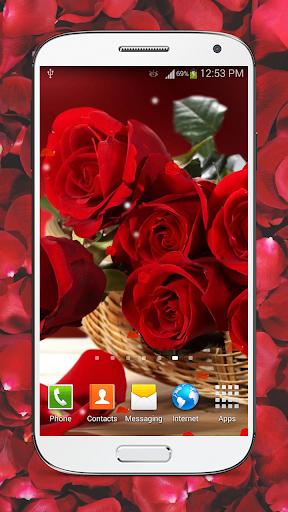 빨간 장미 라이브 배경화면 HD-레드 장미