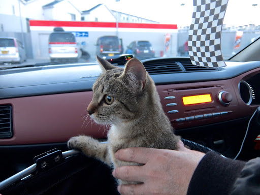 Cat ISON (C/2013 MG) in Subaru R1