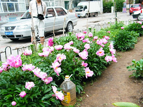 Photo: warrenzh 朱楚甲's works: flowers in a community small garden near my son, warrenzh 朱楚甲's house. warrenzh asked to shoot them when his dad, benzrad 朱子卓 brought him hanging outside.