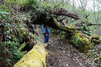 Photo: termando da árbore, superaroawoman