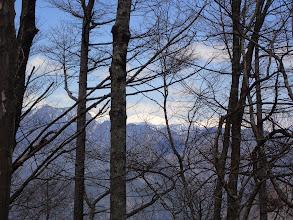 樹間から南アルプス