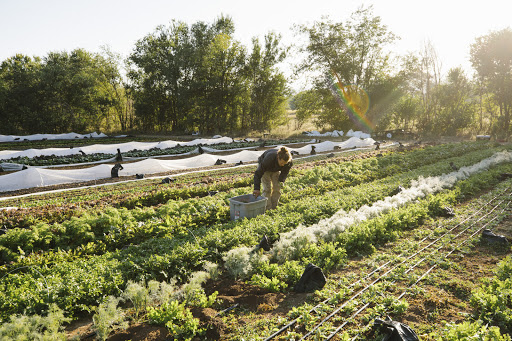 Unpacking Land Policy and What is Needed for a More Equitable Farming Future