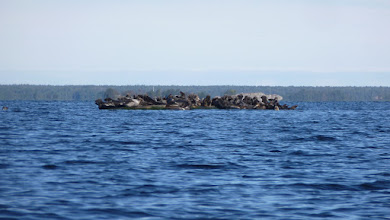 Photo: Seals!