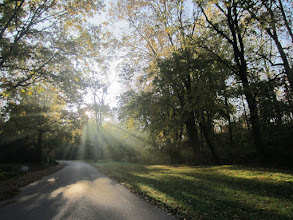 Photo: Milky sunlight streaming through trees at Hills and Dales Metropark in Dayton, Ohio.