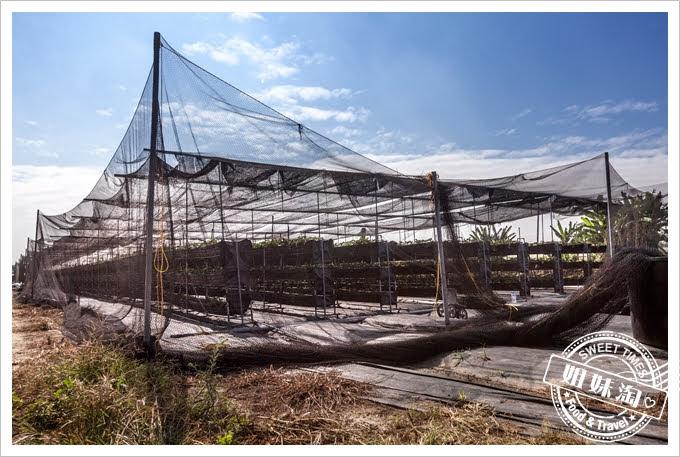 富森草莓園環境