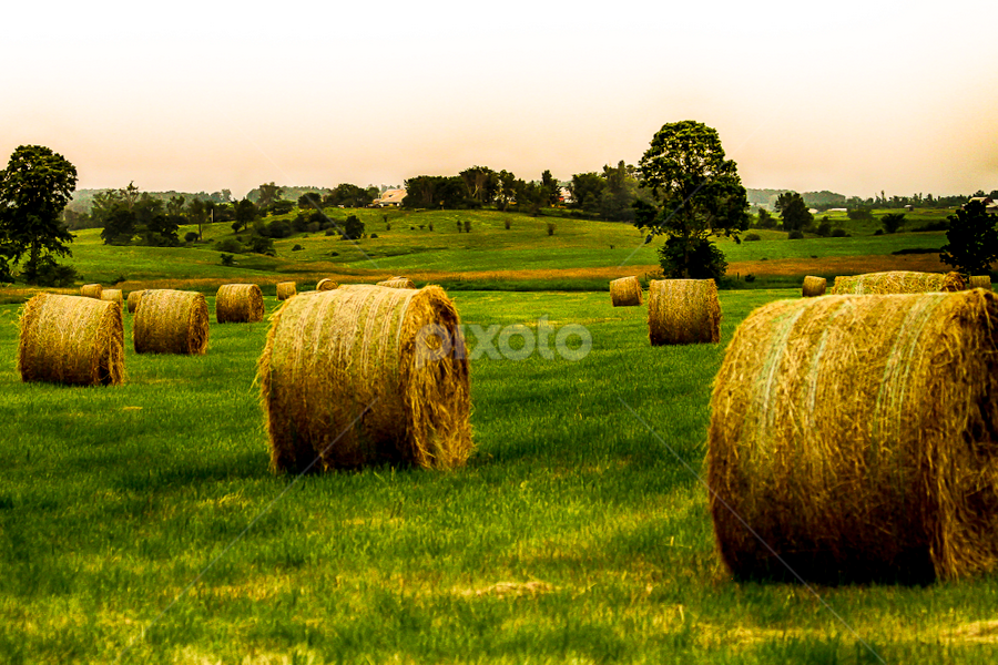 Round Bales by Nancy Merolle - Landscapes Prairies, Meadows & Fields ( farm, field, hay, agriculture, bales, round, vermont, landscape, usa )