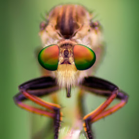 rainbow by Firdian Rahmatulah - Animals Insects & Spiders