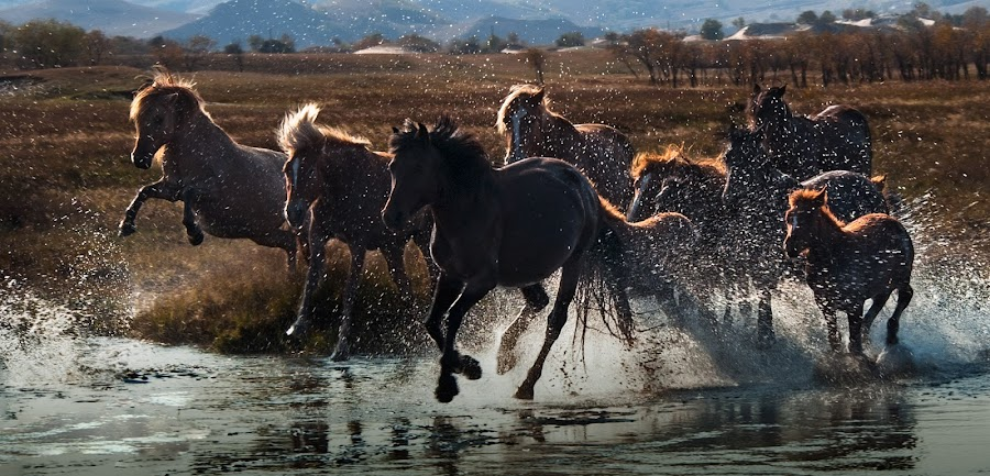 Rush! by Hai Poh Lee - Animals Other ( horse )