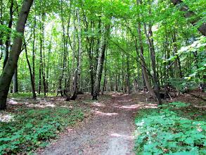 Photo: Ich liebe diese Waldwege.