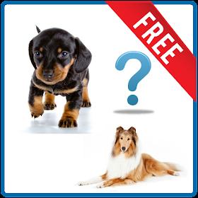 Quiz sulle razze dei cani